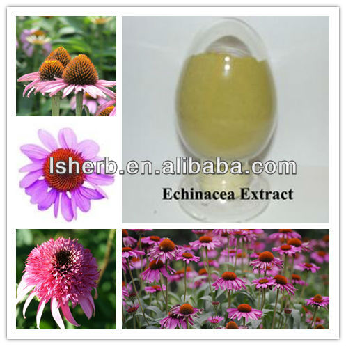 2012 Hot Selling Echinacea Extract (polyphenol 4.0%. UV)