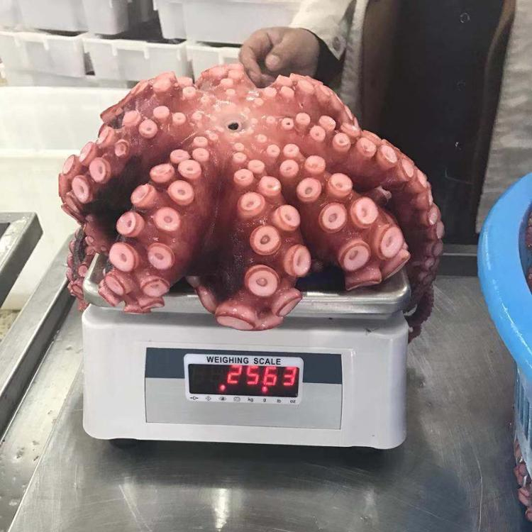 High quality frozen boiled octopus live octopus for sale