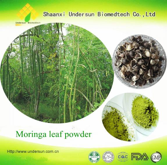 Moringa Leaves Powder Type And Powder Dosage Form Moringa Oleifera ...