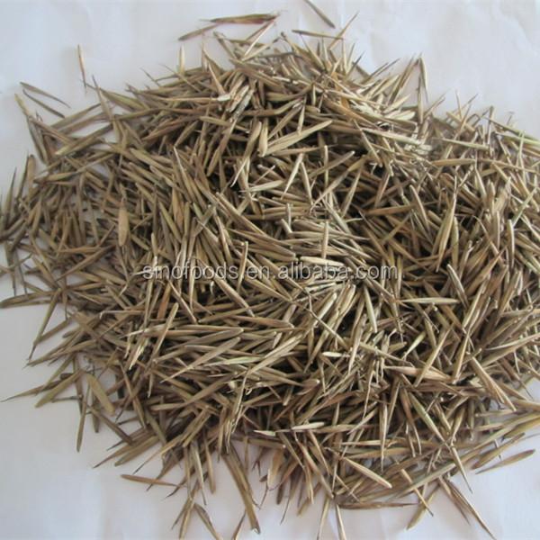 semi di bamb moso ad alta germinazione tasso di bamb i