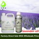 Aromatherapy Beauty Spa Aroma Diffuser Lavender Oil Price Organic Lavender Essential Oil Kit Gift Set Bulk
