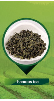 9501 9502 9503 Famous Chinese Green Tea Competitive factory Tea Price Per Kg