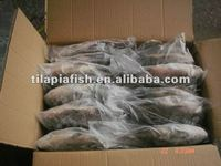 high quality frozen tilapia whole round seafood