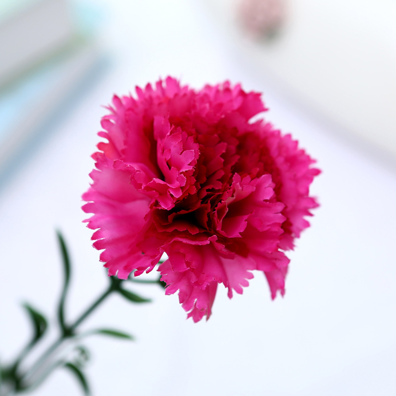 Оптом компания цветы гвоздики, цветов губкин