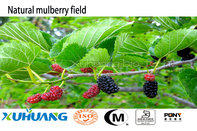 Organic Mulberry Leaf Powder Morus Bombycis Mulberry Root