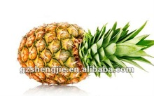 Real Look Artificial Pineapple for Decoration