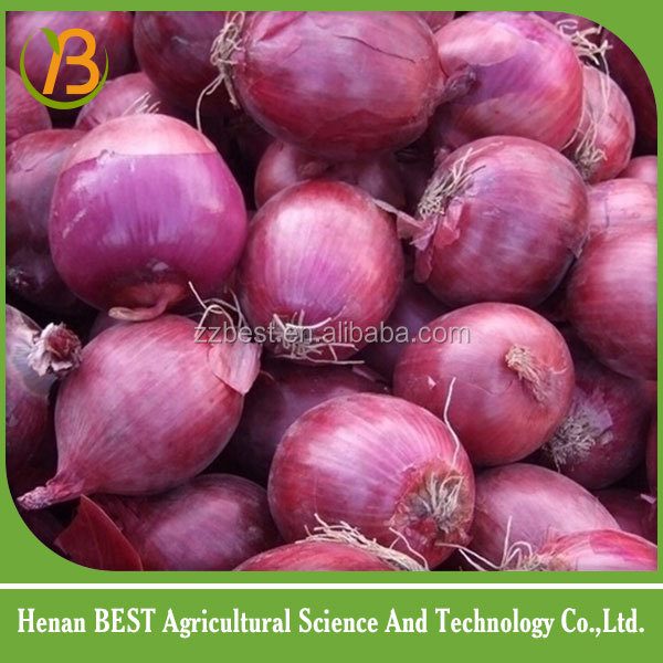 2016 crop market onions prices for sale
