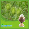 hot new products for 2015 burdock oil powder