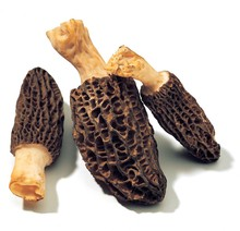 High quality cultivated dried sichuan HD005 fresh morel mushrooms
