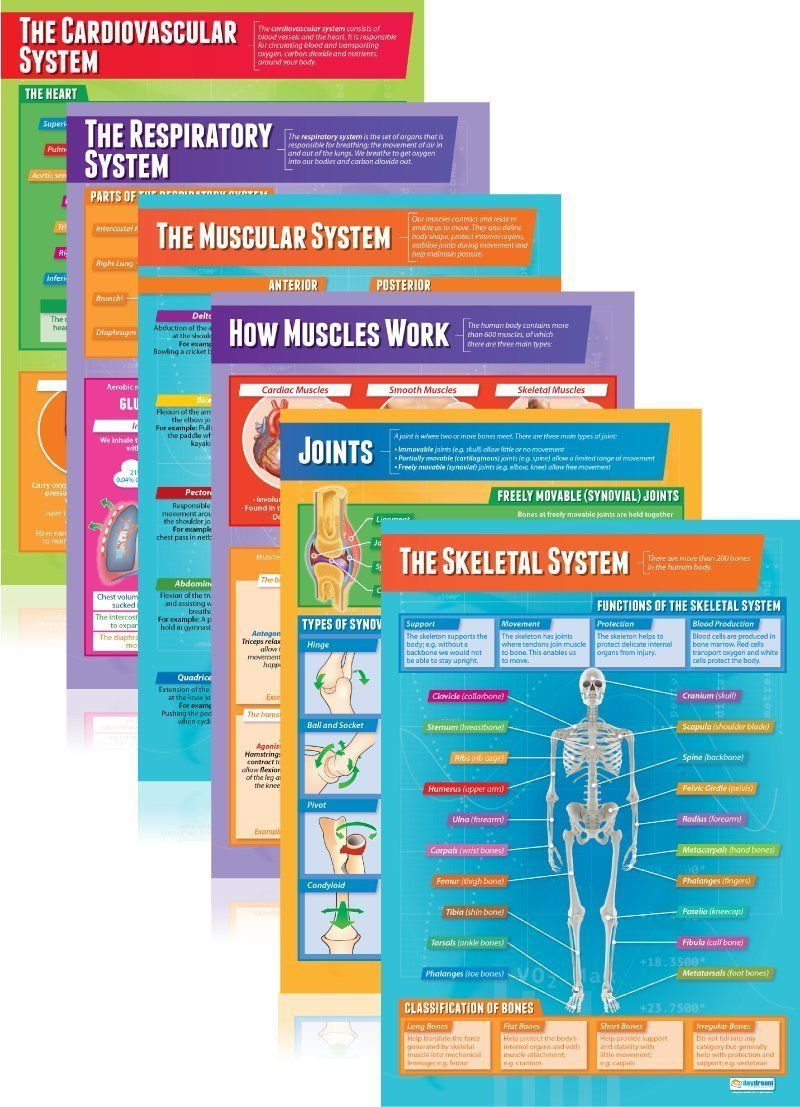 Cheap Physical Anatomy, find Physical Anatomy deals on line at ...