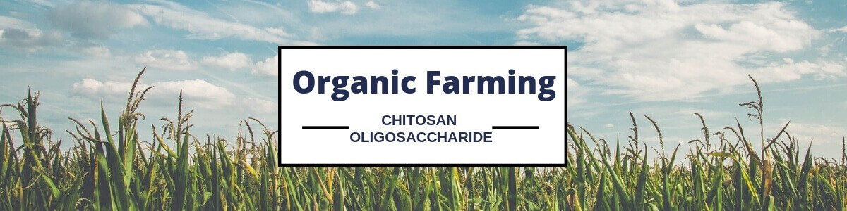 Landwirtschaftliches Chitosan-Fungizid-Chitosan-Oligosaccharid mit großem Preis