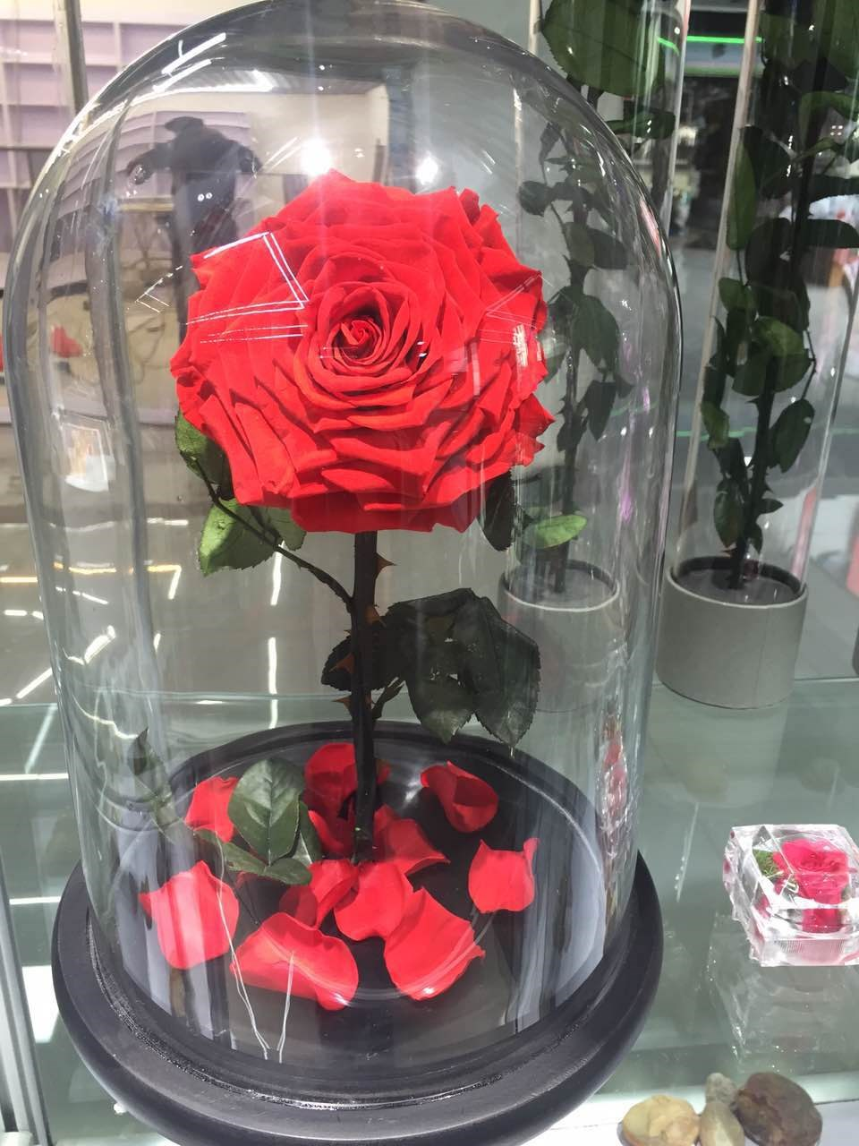 preserved roses in glass flower in glass tube from yunnan. Black Bedroom Furniture Sets. Home Design Ideas