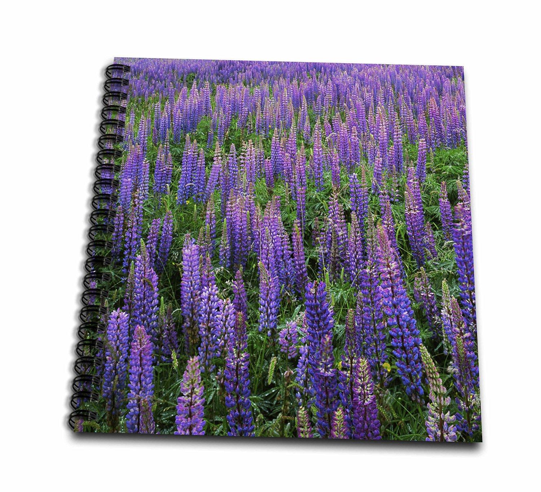 Danita Delimont - Charles Gurche - Flowers - USA, Washington, Clallam County, Lupine - Memory Book 12 x 12 inch (db_189717_2)