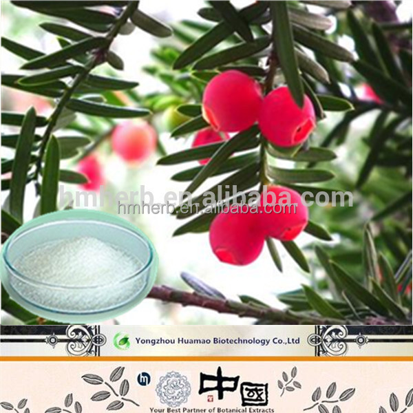 Companies looking for distributors Chinese Yew Extract