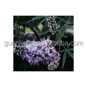 Factory Chasteberry Extract / Chaste Tree Berry Extract / Vitex agnus-castus.