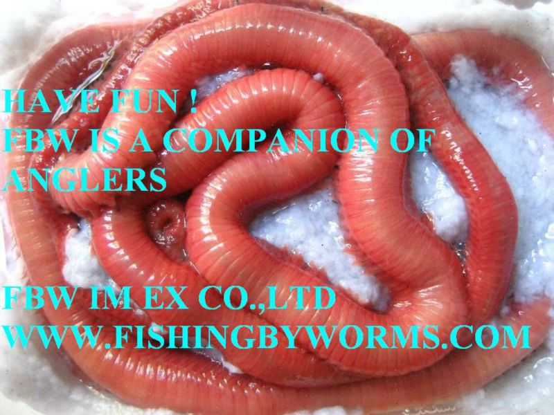 CORDELLE WORMS