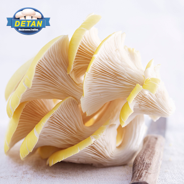 Detan High Production Yearly Supply King Oyster Mushroom Spawns/logs/bags/grow Kits (offer Professional Technical Guidance )