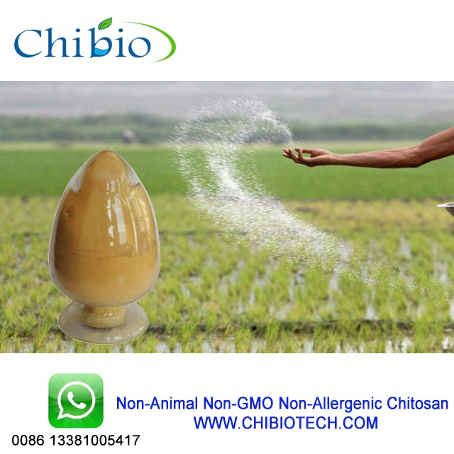 Best Chitosan Raw Materials For Agriculture Products - Buy Chitosan Raw  Materials,Chitosan For Agriculture,Chitosan Product on Alibaba com