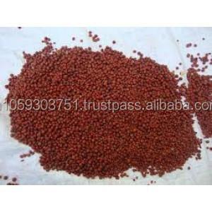 Indian Malkangni Seed Oil