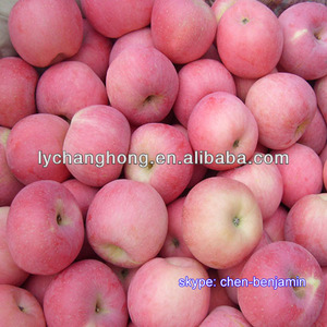 China wholesale custard Apple fruit for sale
