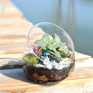 Glass Plant Bowl Wholesale Plant Bowl Suppliers Alibaba
