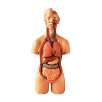 19 parts 55cm medical science human body model with internal organs, Bisexual human anatomoical model
