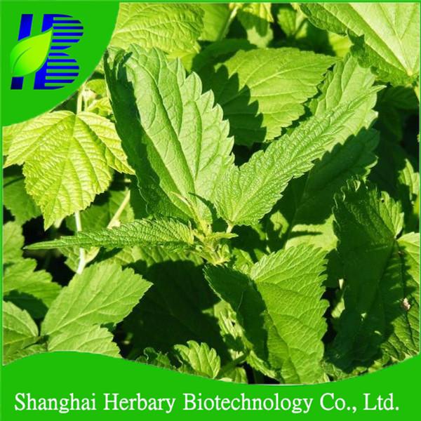 Natural Herb Nettle Leaf Tea