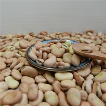 Wholesale Split Broad Beans faba beans With Best Price