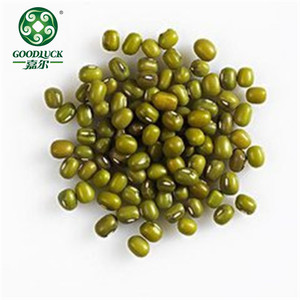 Peeled Myanmar Mung Dal Bean in pp woven bags 50kg for Sale