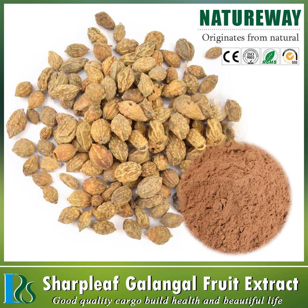 One touch express manufacturer Alpinia Extract Powder