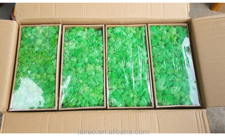 Wholesale Green Preserved Moss custom printed moss crepe