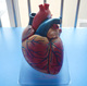 Human Anatomy heart model with Bypass, Anatomical Heart