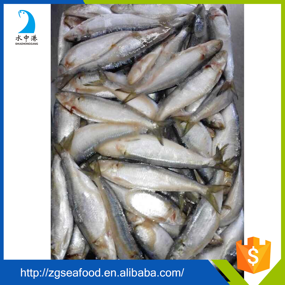 Delicious Frozen HACCP Sardine Fish and sardine raw material