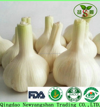 Normal White Pure and White Fresh Garlic
