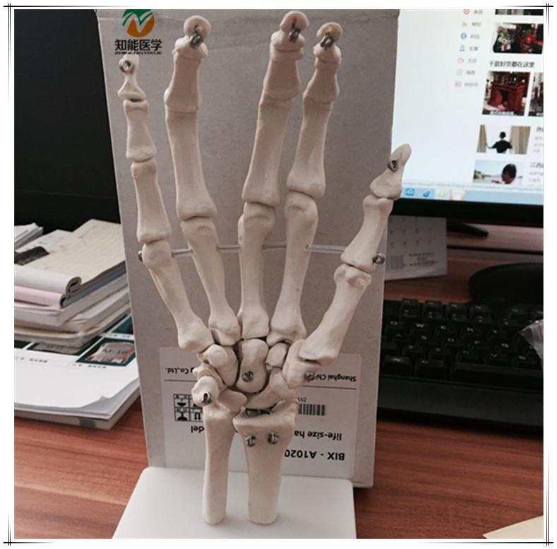 Venta al por mayor anatomía humana esqueleto-Compre online los ...
