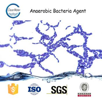 Anaerobic Bacteria Agent Biological Agent For Water ...