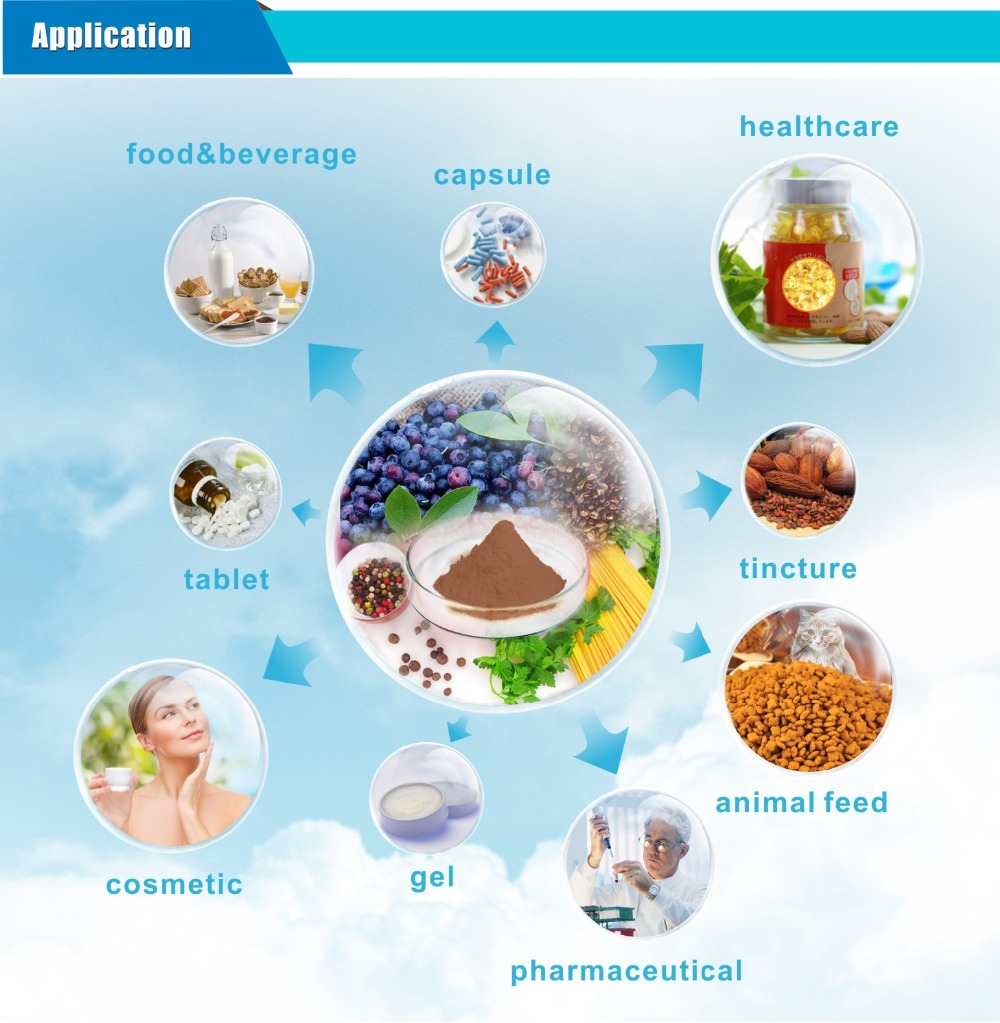 Care health herbal manufacturer product - Haccp Factory Manufacturing Herb Extract Ginkgo Biloba Extract Powder Organic Ginkgo Biloba Leaf Extract