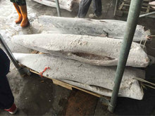 hot sale;frozen black marlin;good quality