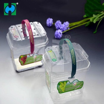 Custom plastic container Plastic Fresh Fruit Packing