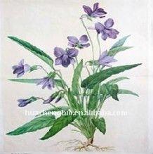 100% Natural Corydalis yanhusuo Extract