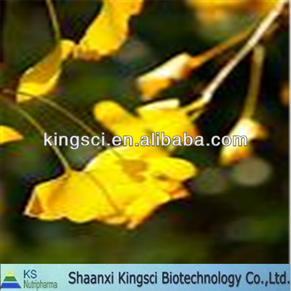High quality of natural ginkgo biloba extract liquid