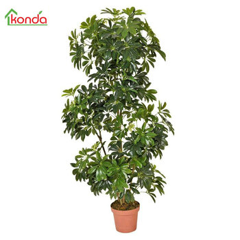 Factory Wholesale Artificial Landscaping Fake Fruit Bonsai Tree Decorative Golden Banyan Buy Golden Banyan Fake Fruit Bonsai Tree Decorative Golden Banyan Factory Wholesale Artificial Landscaping Fake Fruit Bonsai Tree Decorative Golden Banyan Product