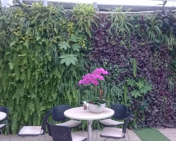 Ivy Covering Grass Plant Design Flower Box Hedge 2017 Ornamental Boxwood Green Artificial Vertical Garden Wall