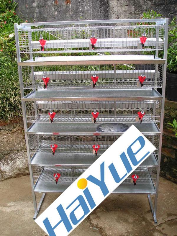 Automatic Drinker Quail Farming Equipment - Buy Quail ...