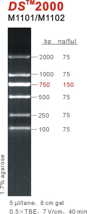 DSTM2000 DNA Marker 2000bp 2kb