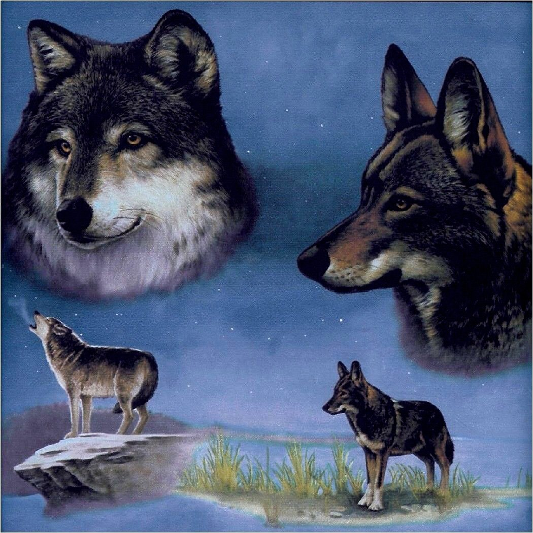 """Custom & Cool {3.5"""" Inches} Set Pack of 4 Square """"Grip Texture"""" Drink Cup Coasters Made of Flexible Poly Fabric w/ Rubber Bottom & Wolves Howling in the Night Design [Colorful Blue, Gray & White]"""