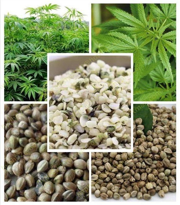 Семена конопли сыроедение фото все разновидности конопли