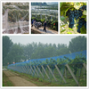 3mx12m Black Anti Bird Netting Net Mesh For Fruit Crop Plant Tree Vineyard