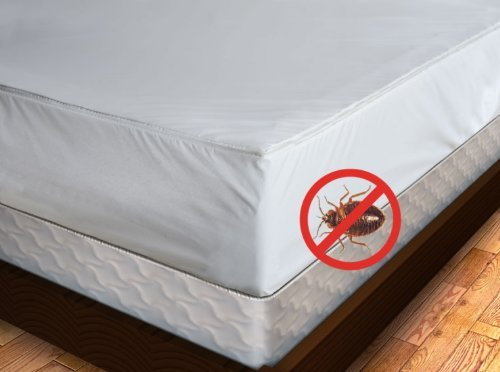 how cover encasement on a put bug all to encasements mattress kill bugs bed