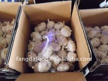 Fresh normal/dry pure white garlic in cartons/garlic in brine